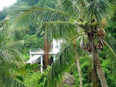 Debido a su ubicación, la villa parece estar flotando en la selva