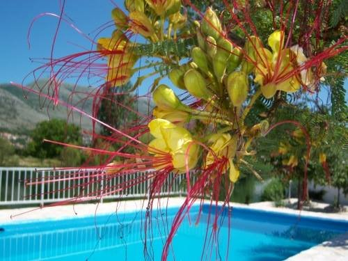CHARMING HOUSE WITH PRIVATE POOL ON THE RIVERSIDE, NEAR DUBROVNIK, vacation rental in Trebinje