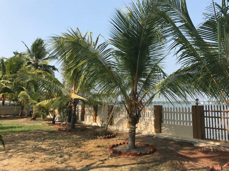 cocotiers autour