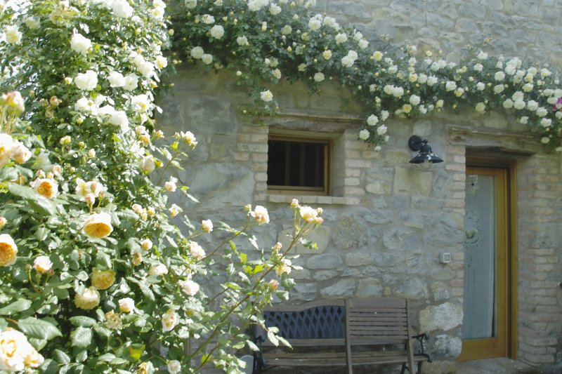 Ca' Minù, roses's home in Nogarolo di Tarzo, wifi, climate, garden. pets welcome, vacation rental in Conegliano