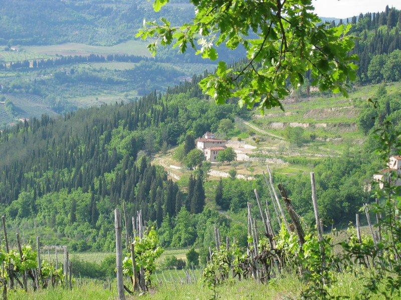Antica long distance shot.  South facing across the vineyards
