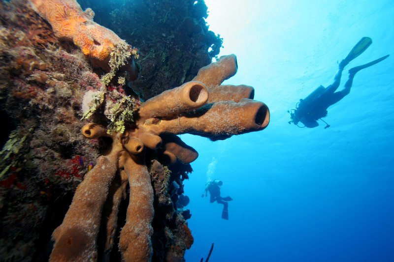 On every diver's bucket list Blood_ Bay Wall is a not-to-be-missed experience