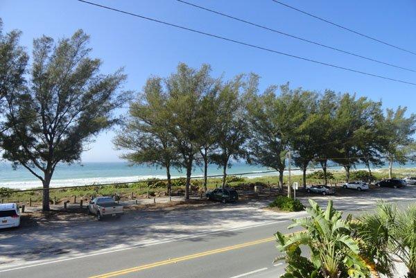 Road, Palm Tree, Tree, Vegetation, Dirt Road