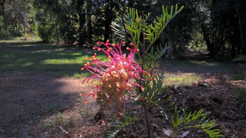 jardines con más de 250 árboles y arbustos escogidos para atraer aves y mariposas