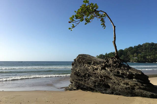 Check out this defiant little almond tree striving on a rock in Las Cuevas Bay. Day trips available!