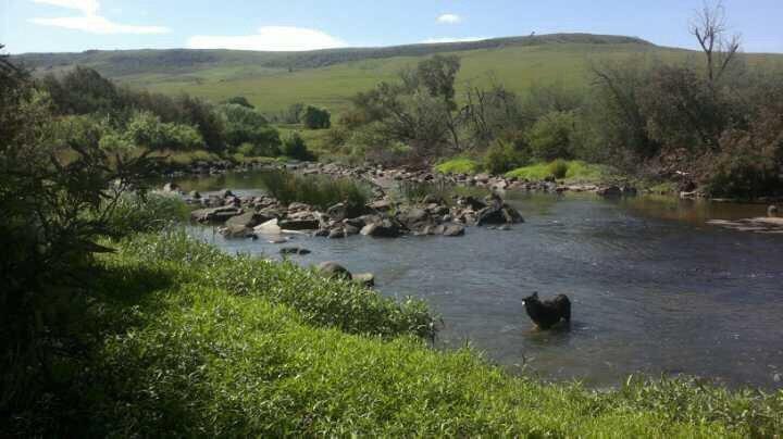Il nostro vecchio border collie Sam godendo di una nuotata