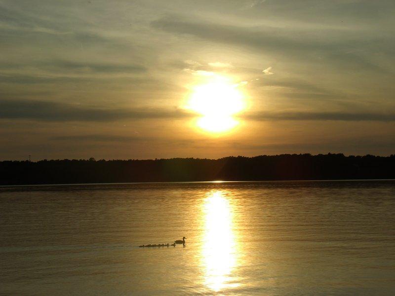 Una familia de patos deslizándose a través de White Lake al atardecer