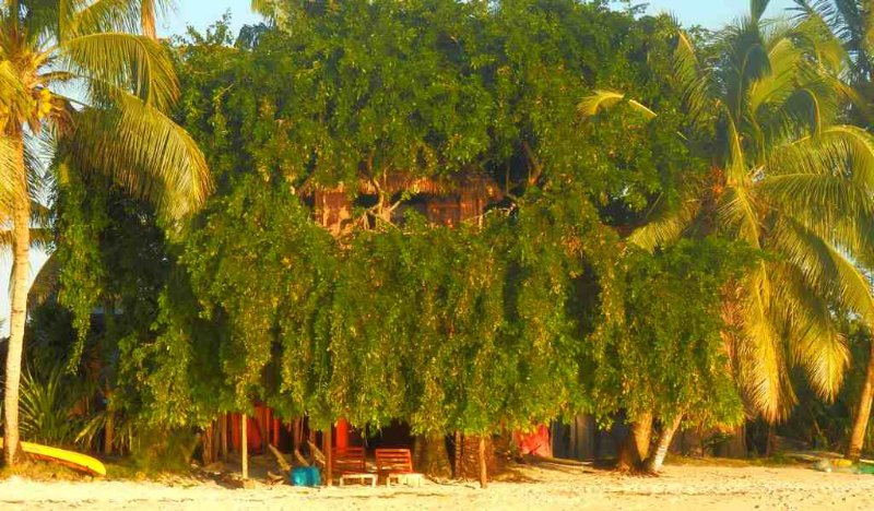 Treehouse, on the beach with breakfast, sea view Airport 5 minutes walk!, location de vacances à Nosy Boraha