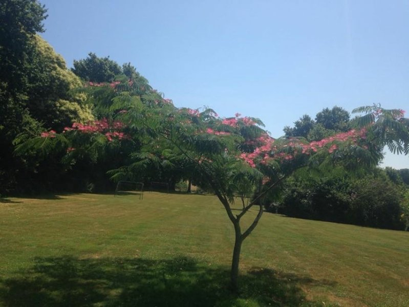 Our Silk Mamosa tree and garden