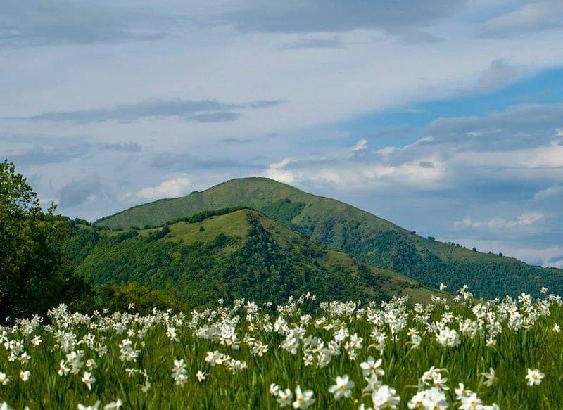 Monte Alfeo (1.651 m.) Val Trebbia entre las provincias de Piacenza y Génova