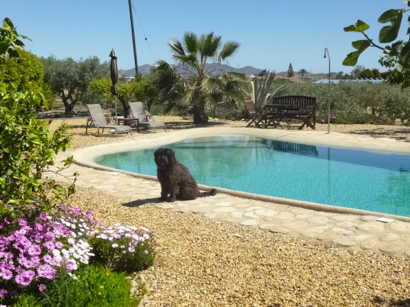 Well Behaved Dogs Are Welcome At Finca Arboleda