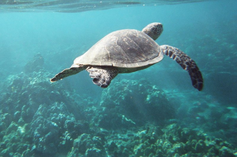 ou une tortue de mer