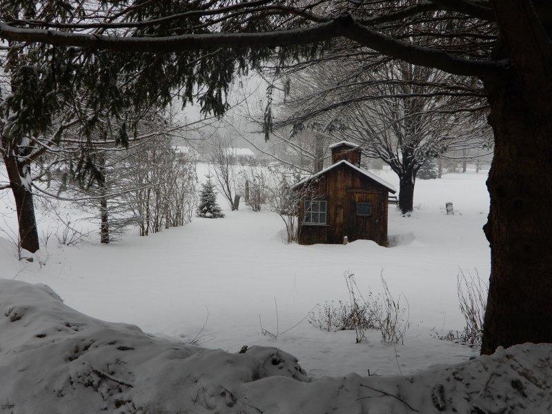 Cour arrière d'hiver