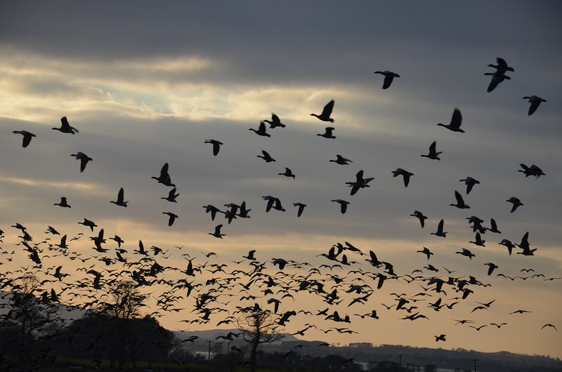 The bird life is wonderful. Much can be seen in the garden & RSPB Vane Farm is only 5 mins away.