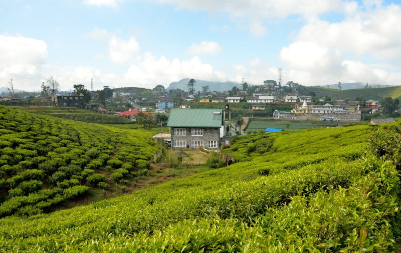 Sarah Cottage seen from the Pedro Tea Estate