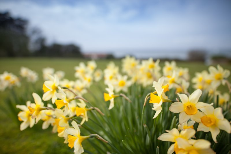 Daffodils in front of Serendipity's sea-facing garden. Watch the yachts sail by with a glass of wine