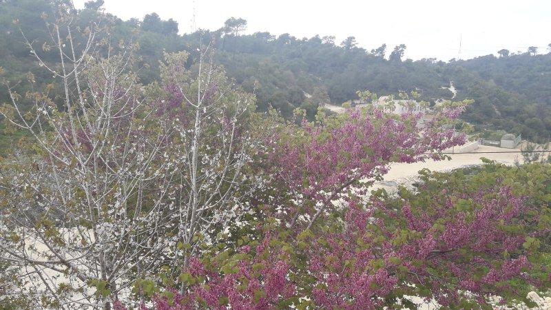 Un encantador apartamento en la arboleda natural, en el Monte Carmelo