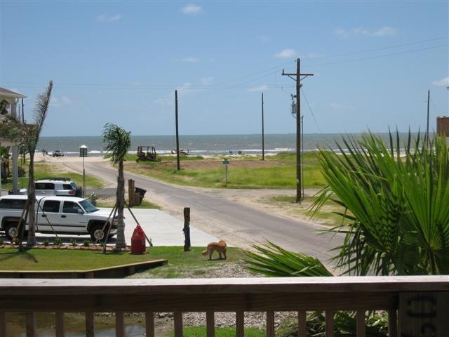 Palm Tree,Tree,Building,Boardwalk,Deck
