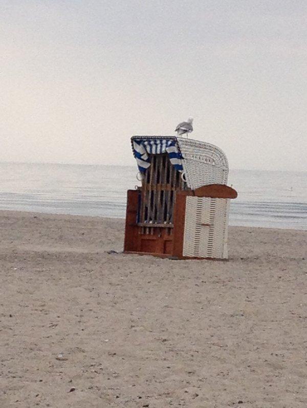 Chaises de plage à louer, y compris Mouette