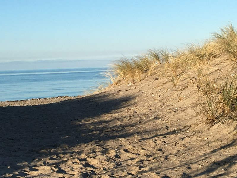 Dunes avec herbe plage