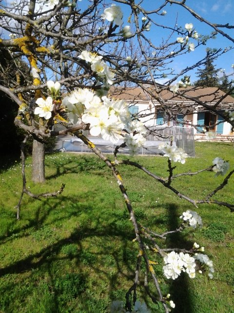 Beautiful and tranquil family holiday villa with pool near Nimes, holiday rental in Sauzet
