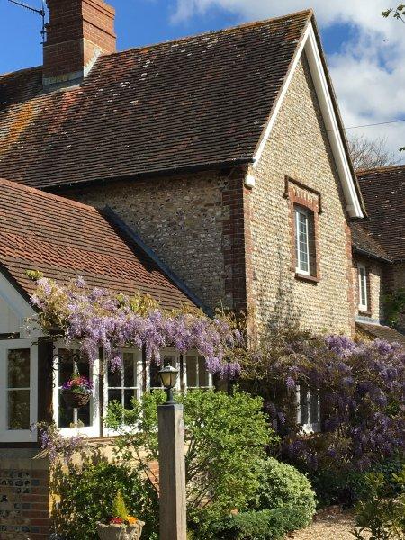 Richmond Cottage, resplendissante dans glycines!
