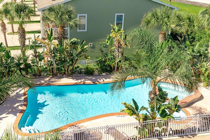 Pool,Water,Palm Tree,Tree,Fir