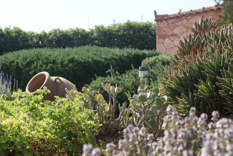 Deatials in the garden
