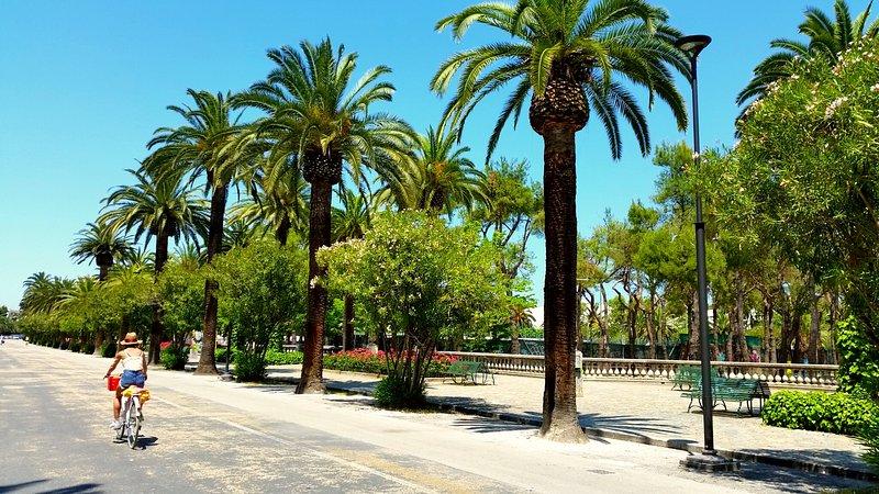 A avenida das palmeiras