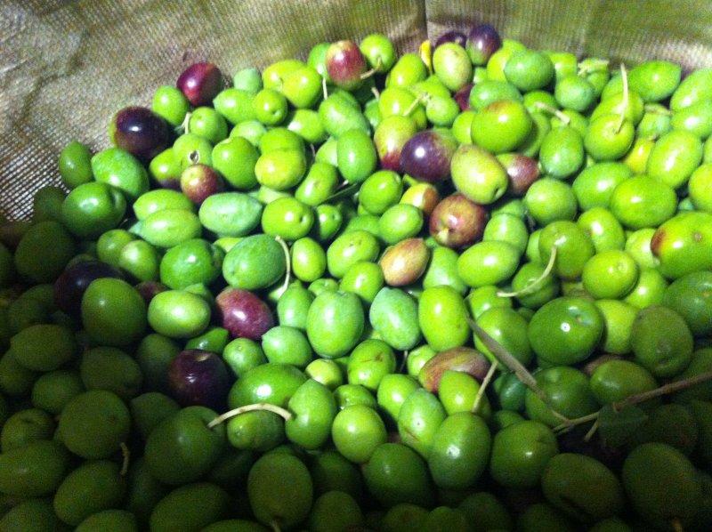 Les olives provençales