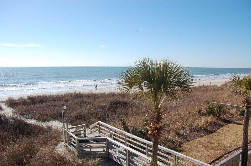 Palm Tree,Tree,Boardwalk,Deck,Path