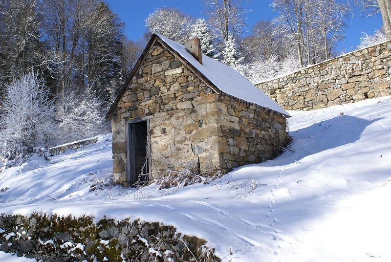 omringende winter