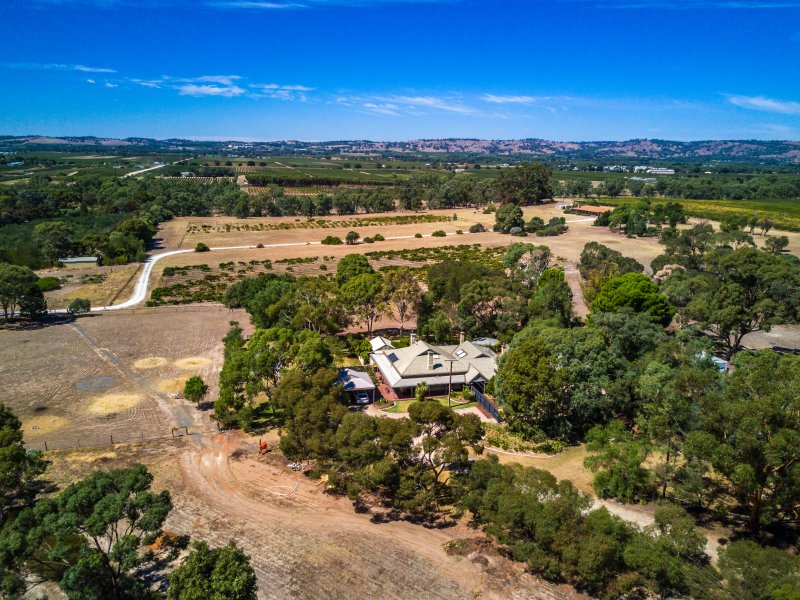 The Paddocks 42 acres in the heart of the Barossa Valley
