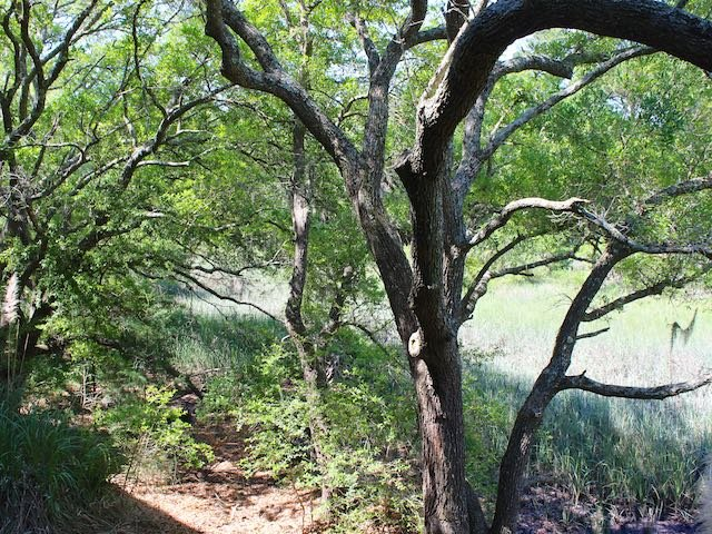 Lush, green trees provide shade.