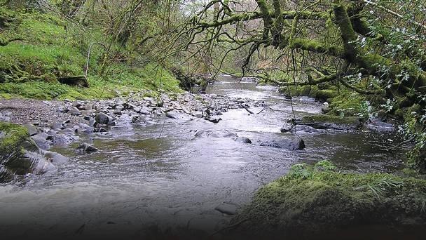 Rivière Faughan - 100 mètres de la maison