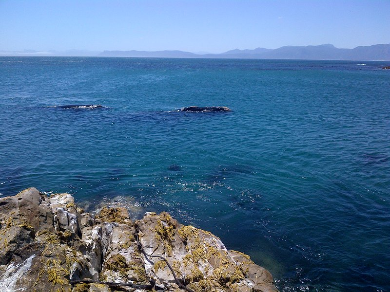 Whale watching from the rocks