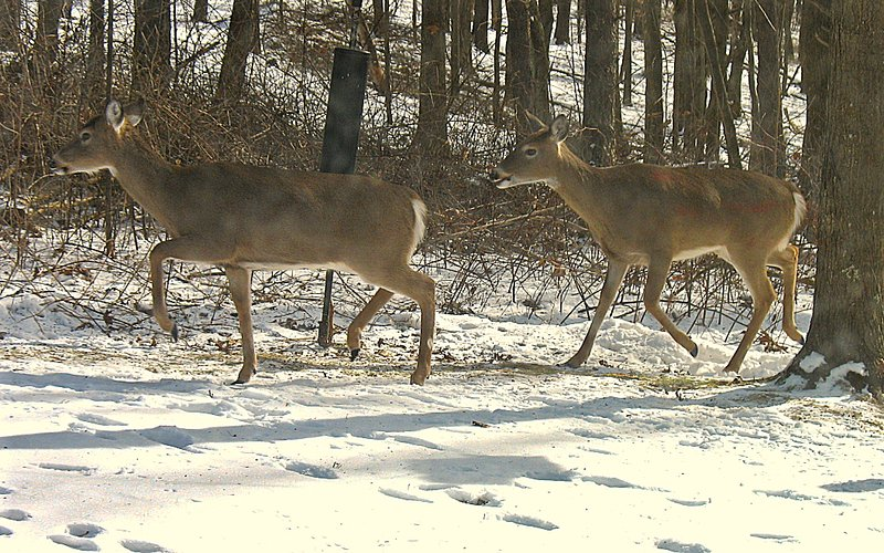 We had to include the deer!  They visit daily during the winter.