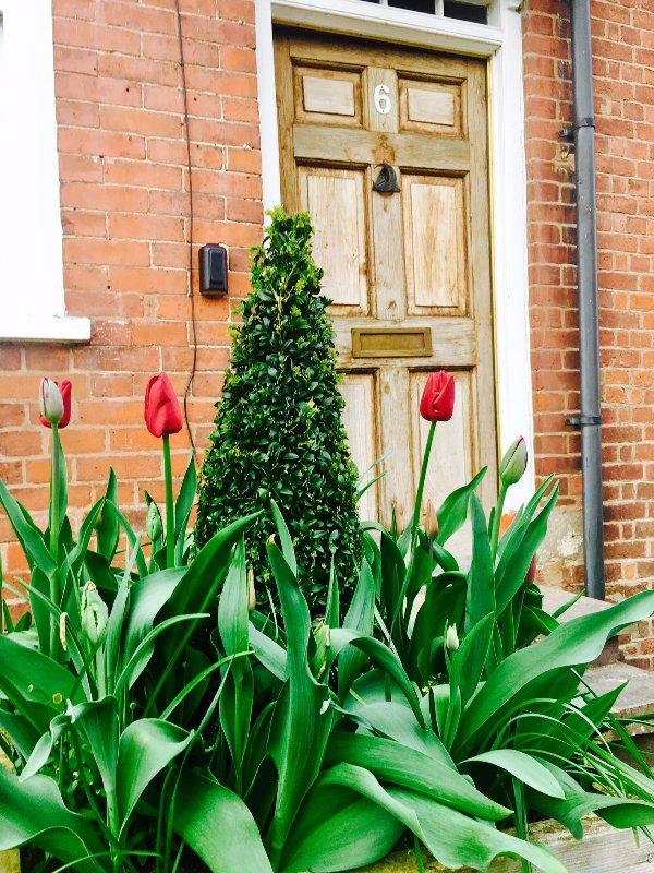 Tulipes par la porte d'entrée.