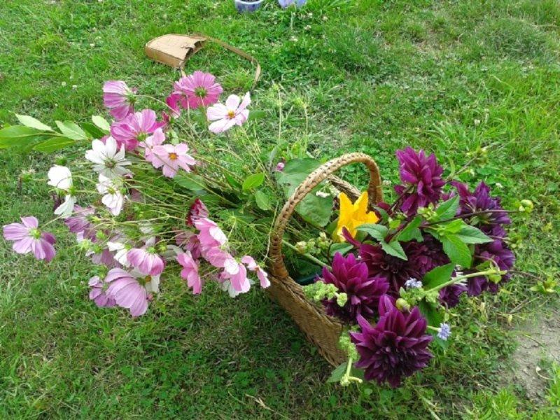 Un bouquet du jardin