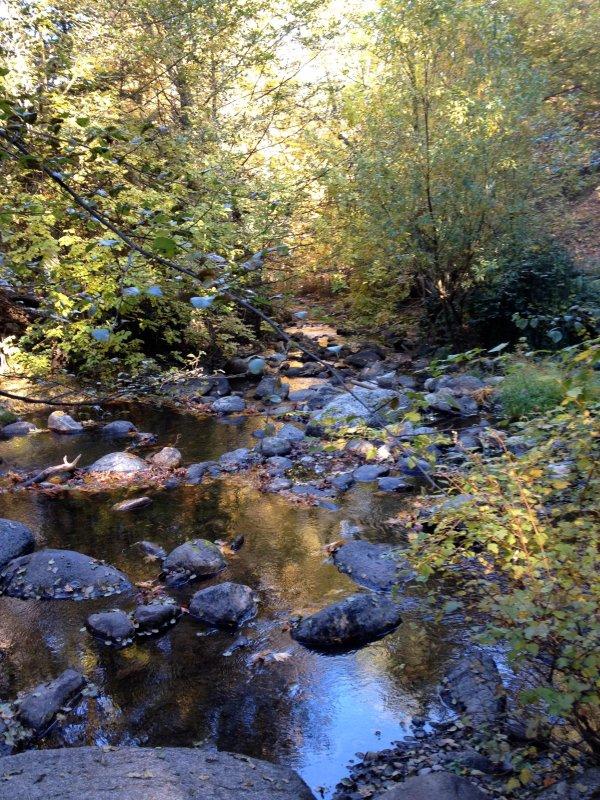 Lithia Park - The famous Ashland Creek
