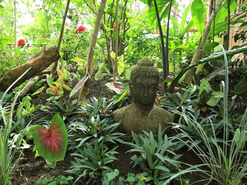 Notre jardin tropical
