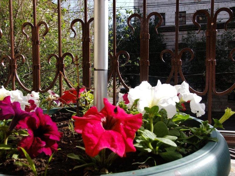 Ver, Vista a la calle, jardín, detalle decorativo, Vista al jardín, Vista a la ciudad