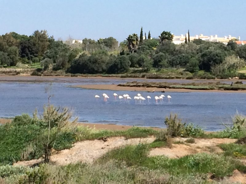 Flamants dans le lagon