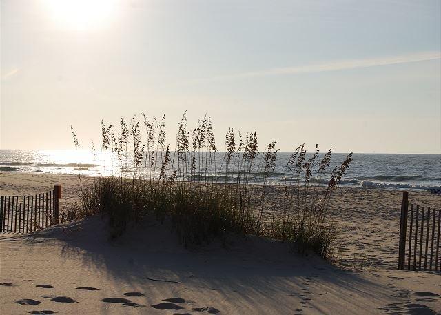Dunes 709