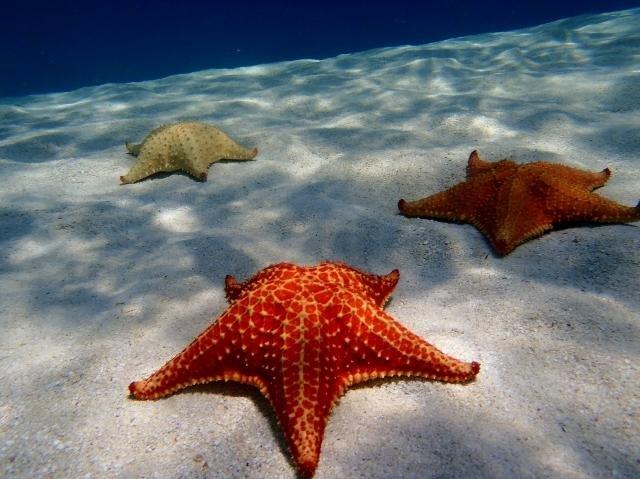 Ontdek de schoonheid van de zeebodem van San Blas en duiken tussen zeester en tropische vissen