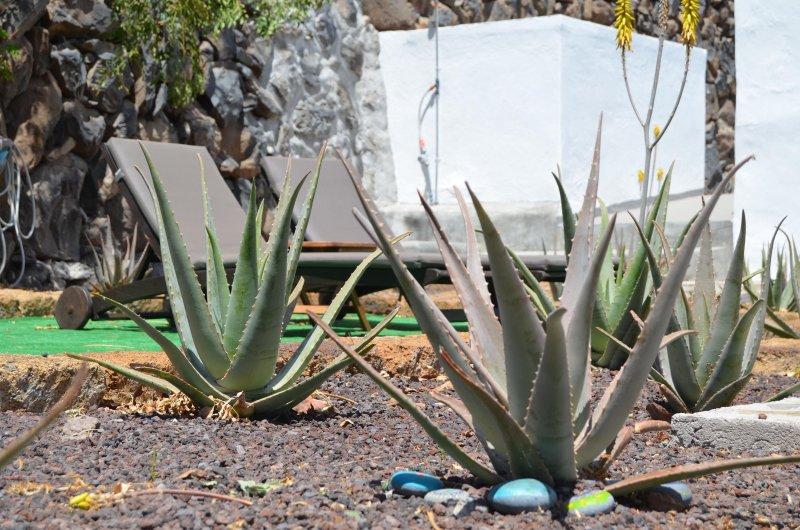 Villa Aloe - Oceanview Sunny Family Home, aluguéis de temporada em Agulo