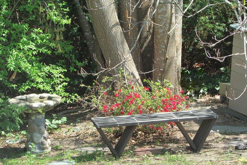 Banco debajo del árbol de tulipán (álamo amarillo).