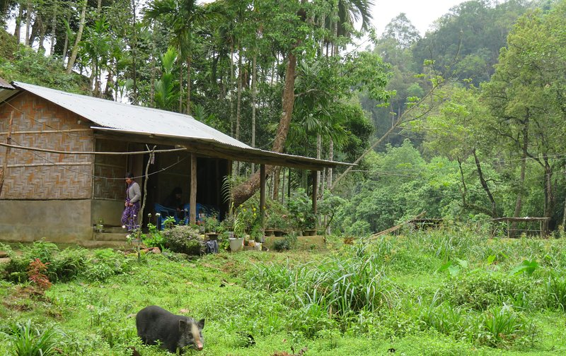 Karvani Eco Homestay, alquiler vacacional en Meghalaya