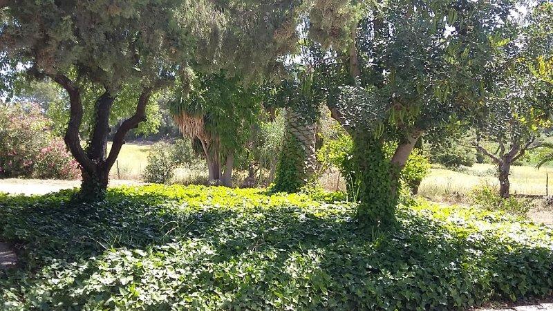 Fantástica Finca en Paguera, location de vacances à Galilea