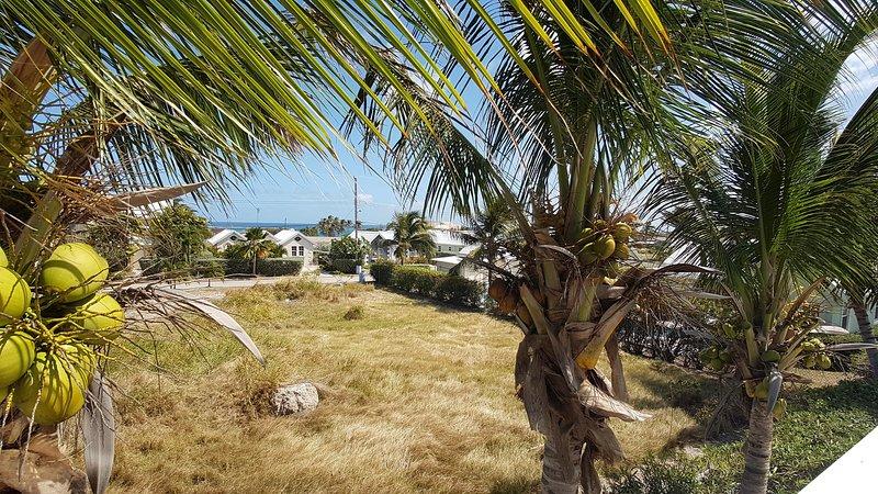 Vue sur la mer, à travers les palmiers, de notre terrasse sur le toit